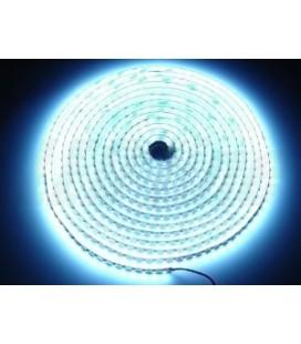 Ruban LED blanc 9,6 W/m. IP67 à 12V de Roblan